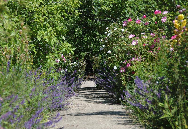 Cambo House gardens